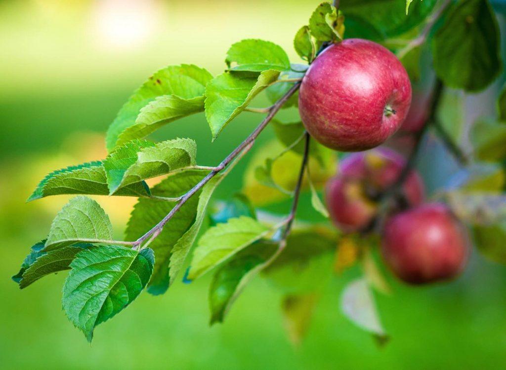 3 keer laaghangend fruit om te groeien als ondernemer